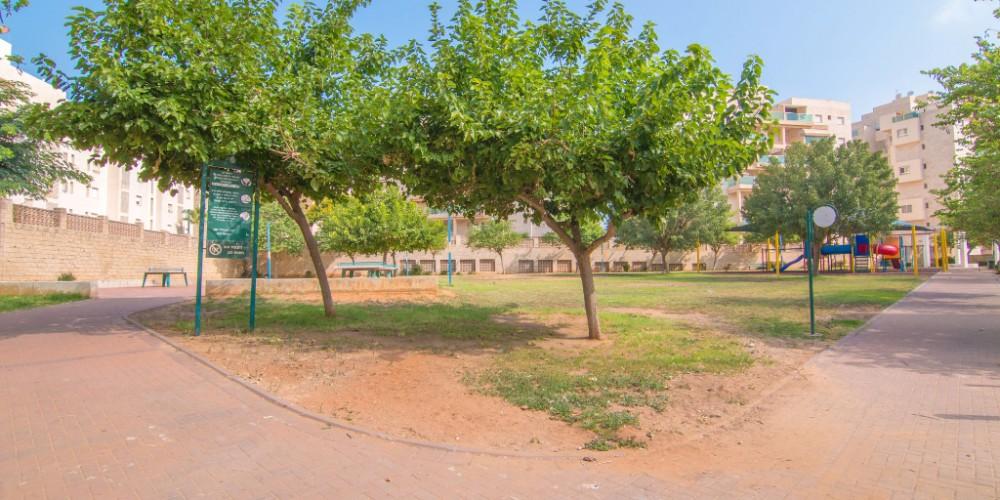 פארק אחורי